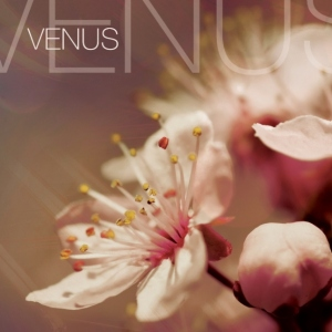 DEVOTION-VENUS 1 - fanzine