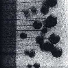 Simon Balestrazzi – Annulled By Inertia  1 - fanzine